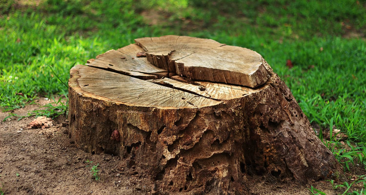 Stump Grinding - Meta Landscaping